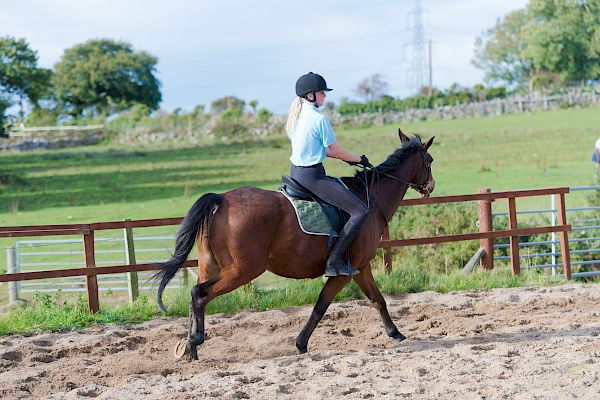 Snowdonia Riding Stables 15th October