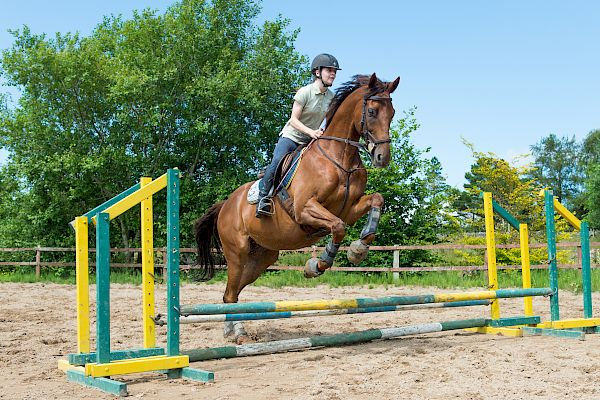 Snowdonia Riding Stables Geoff Billington Clinic